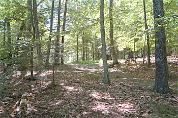 Cragsmoor Conservancy Forest